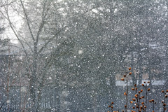 A snowy day in April (ctberney) Tags: snow white weather backyard spring cold wintry
