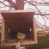 01-20180407_090446-00 (www.cabane-oiseaux.org) Tags: 2018040709h012018040709044600jpg 20180407 09h