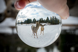 Deer In A Sphere (IN EXPLORE 4.6.18)