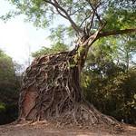 Prasat Daem Chrei Temple, Sambor Prei Kuk thumbnail
