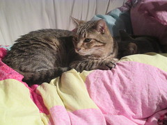 Lucy Resting on Sophia When She's Sick (Pictures by Ann) Tags: sophia sick ill resting rest sleeping sleep couch blanket lucy cat feline protector protect watch comfort care love