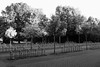 School's out for the summer... (gambajo) Tags: 1year1town1lens brühl blackandwhite blackwhite black white trees bicycle empty lonely mood school public outdoors x100s fujix100s fujifilmx100s