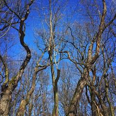 Trees, trees, trees (basiamarcisz) Tags: nature blue przyroda natura błękit sky niebo drzewo drzewa trees tree