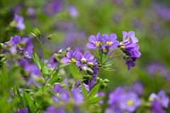 DSC_0574_00005 (pariscross) Tags: nature botanical gardens garden floral flowers plants plantlife