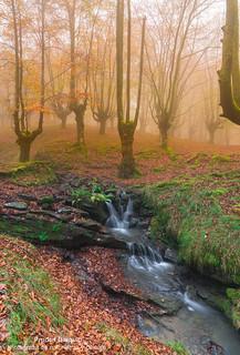 La magia de los bosques de otoño