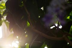 Shine (Sagadh) Tags: closeup closeups close