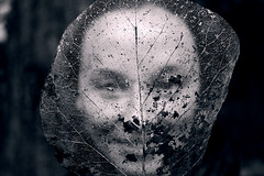 veil (heinrick oldhauser) Tags: face leaf veins lace veil winter