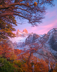 Revealed (Maddog Murph) Tags: tree indian bread fitz roy patagonia mt mountain mountains fall autumn folliage orange foliage sunrise alpine glow aspen pink sucia lake glacier snow ice peak cyttaria darwinii darwins fungus cerro chalten light morning travel find art photography landscape