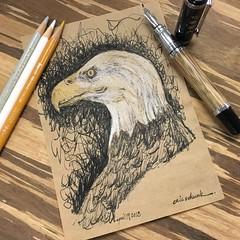 Bald eagle - fude pen and pencils (schunky_monkey) Tags: illustration art penandink ink pen drawing draw sketching sketch fountainpen fudepen american america icon strength strong birdofprey bird baldeagle eagle