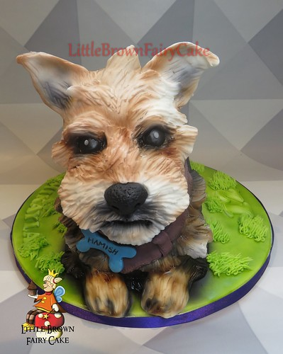 a nother yorkie
