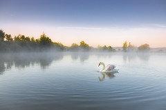 Before sunrise (frantiekl) Tags: swan morning dawn serene water fog nature landscape animals may harmony