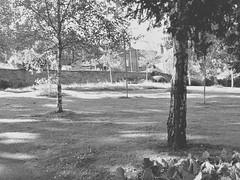 park 316a (*a*dalton*) Tags: worcester park trees uk