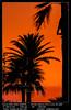 Sunset near of the beach of San Fernando (__Viledevil__) Tags: cadiz camposoto fernando san spain beach bright cloud coast coastline color dawn evening heaven landscape nature ocean orange outdoor paradise scenics sea skies sky sun sunny sunrise sunset sunshine surface tourism travel water sanfernando andalucía españa es