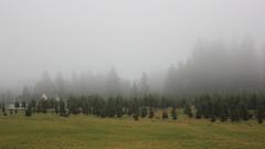 A Foggy Day's Start (PDX Bailey) Tags: fog mist morning foggy pine fire house field grass home