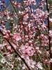 la primavera en todo su explendor (Virginia Vicente Orna) Tags: monasterio de piedra naturaleza aragon cascadas agua