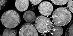 fomapan100_6x12_0007 (ekech) Tags: analog analogue ishootfilm istillshootfilm buyfilmnotmegapixels diy diy6x12rollfilmback 6x12 3dprint 3ddruck rollfilmback rollfilm forest wald bäume trees fomapan200 fomapan foma rodinal blackwhite schwarzweiss bw sw monochrome horseman45hd horseman 4x5 4x5camera grosformat largeformat panoramic panorama 21
