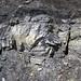 Sandstone (Middle Pennsylvanian; Frazeysburg Pit, Muskingum County, Ohio, USA) 12