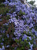 Deep Purple in the Garden (David Hobbs / Mr Hobbs Coffee) Tags: purple colour nature