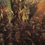 Vietnam War 1967 - Troops Frisk Captured Viet Cong Youth thumbnail