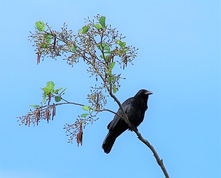 Nice perch Mr. Crow.