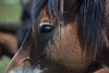 (MomchilAtanasoff) Tags: horse headshot portrait vivitar70210f35 canon 6d bulgaria rila mountain