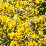 Fernbird/Matata thumbnail