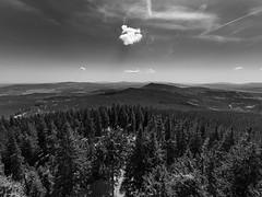 Šumava / Bayerischer Wald (Petr Horak) Tags: novýknín czechia cze bw bohemia czechrepublic em1 europe landscape outdoor forest