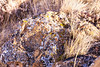 Badland Trail, Dinosaur Provincial Park, Alberta (aud.watson) Tags: canada alberta albertaprairie newellcounty dinosaurprovincialpark reddeerriver worldheritagesite sedimentaryrock aridregion grassland prairie badlands sandstone mudstone sandstonecliffs badlandtrail hoodoos canyons ravine ravines gully gullies iddesleigh landscape erosion ca boulder lichen