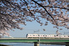 20180329-DS7_2457.jpg (d3_plus) Tags: d700 street 日常 walking 横浜 garden kanagawapref 電車 庭園 自転車 サイクリング 川崎 sky park kawasaki afnikkor50mmf14 streetphoto spring nikon flower nikonaiafnikkor50mmf14 散歩 nikond700 scenery ストリート cycling bokeh 屋外 ガーデン nikkor50mmf14 路上 自然 神奈川県 japan aiafnikkor50mmf14 50mm 50mmf14 50mmf14d thesedays 風景 nature daily pottering outdoor 路上写真 桜 植物 ボケ ニコン ポタリング 春 花 macro 景色 plant dailyphoto train yokohama 公園 日本 bloom ウォーキング nikkor 空