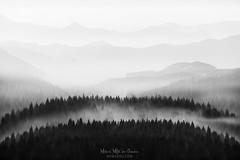 To infinity and beyond (Mimadeo) Tags: tree trees silhouette silhouettes morning fog foggy mist landscape nature background wilderness mountain mountains forest outdoor aerial remote far scenery slopes group distant scenic gradual repetition layer away layers valley misty hill beautiful idyllic pine pines aerialperspective atmosphericperspective black white blackandwhite copyspace