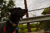 Cortana at Forestville (Tony Webster) Tags: cortana forestville forestvillemysterycavestatepark minnesota preston dog statepark