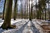 Spring and snow (Svendborgphoto) Tags: winter spring nikkor denmark d800 dof detail woods 1424mm afs 14mm nature rawhdr ultrawide