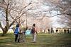 桜 (23fumi@fuyunofumi) Tags: ilce7rm3 sony 85mm fe85mmf18 sel85f18 bokeh emount sakura cherryblossom flower tree walk people japan miyazaki spring 春 宮崎 ソニー 桜 花 人