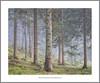 Woodland nr Dunkeld, Perthshire (rossjbrown) Tags: sony ar7ii woodland scotland perthshire mist dawn trees