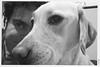 WP_20180306_21_19_53 (anto-logic) Tags: cane pongo labrador blacklabradornero animali amicianimali amici ritratto biancoenero blackandwhite bn bw divano couch relax primopiano meravigliosa libertà libero dolce bello amore fedeltà dof profonditàdicampo bokeh dog animalfriends friends freedom free portrait foreground sweet beautiful love fidelity natural nature pointofview pov depthoffield cute pets cuccioli lovely gorgeous nice pretty wonderful focus postproduzione postproduction lightroom filtro filter effetti effects photoshop alienskin lumia950 microsoft