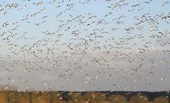 Wings (simonpfotos) Tags: filltheframe crazytuesdaytheme 7dwf