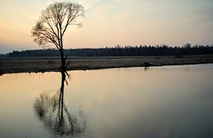 quiet place (daimak) Tags: sonyilce7 evening water tree reflection lithuania sundaylights