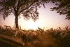 Spring 2018 has come (maxlaurenzi) Tags: spring 2018 sun sunset nature trees calm peace silence walking dramatic surreal mantua light warm italy