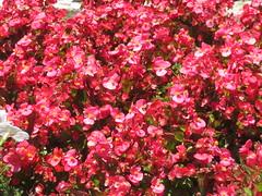 June 12: Little Flowers