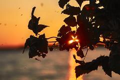On the Sunset (Staropramen1969) Tags: