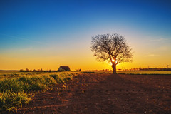 Sunset (Marc Braner) Tags: ifttt 500px field sun rural scene horizon over land cultivated farm rhinelandpalatinate worms germany europe outdoors sky landmark sunset dramatic moody dusk twilight sunbeam agriculture backlit mist rheinhessen fields landscape tree