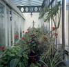 (Chris Hester) Tags: 16 6 salt grammar school baildon plants flowers