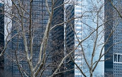 NYC Arch & Trees #18 (Ximo Michavila) Tags: nyc tree winter newyork city usa abstract windows building urban ximomichavila graphic architecture archdaily archidose archiref blue glass lines minimal contrast