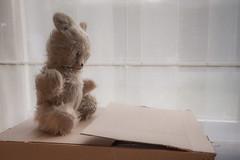 Week 25/52: loneliness [explored] (isabelle.puaut) Tags: 52 week25201852weeksin2018weekstartingmondayjune182018 teddy bear loneliness