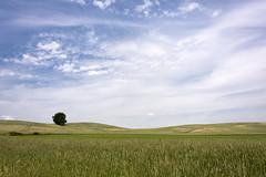 Im Brandenburgischen (*MH*) Tags: landschaft landscape natur nature wiese meadow feld field himmel sky wolken clouds baum tree brandenburg uckermark germany weit wide sommer summer sonnig sunny