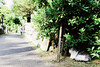 neko-neko2127 (kuro-gin) Tags: cat cats animal japan snap street straycat 猫 canon powershot pro1