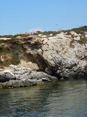 DSCN1662 (pasinifam) Tags: favignana isola dei gabbiani