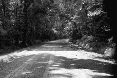 DMAFR Day 3 (11) (momentspause) Tags: nationalwildliferefuge tennessee backroad dirtroad canon5dmkiii canonef50mmf18 blackandwhite bw blackandwhitephotography niftyfifty forest roadtrip road trees