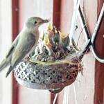 Hungry chicks thumbnail