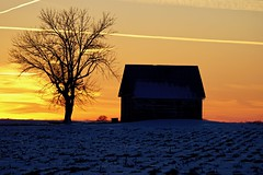 A mesmerizing sunset backdrop for a snowy and rural expanse (Curiously Captivating Creatures) Tags: sunset snowy rural silhouettes shadows expanse snowcover landscape farm illinois